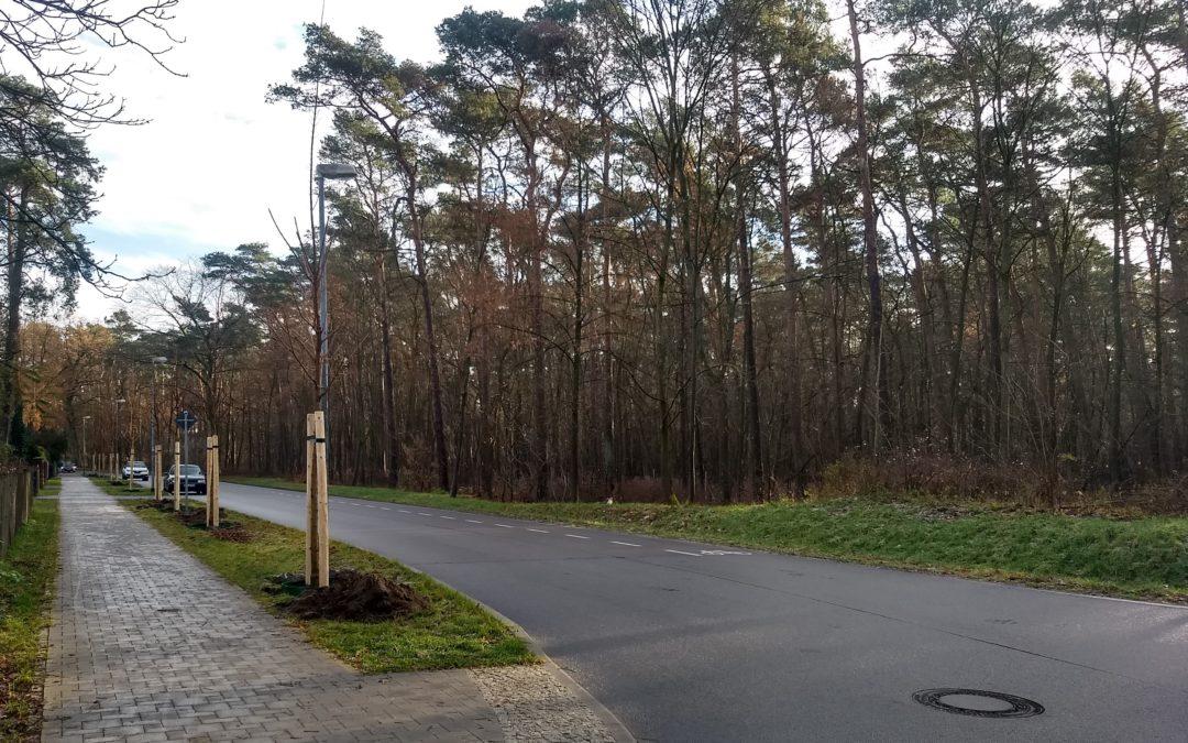Mehr Bäume für Schöneiche